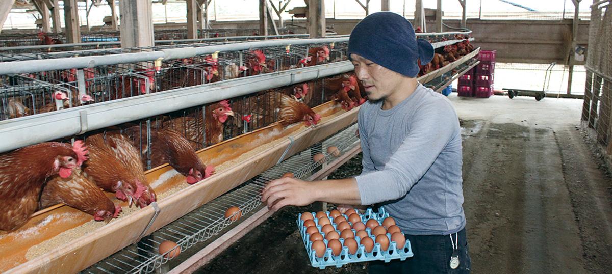 エビハラ養鶏場 代表:海老原 茂