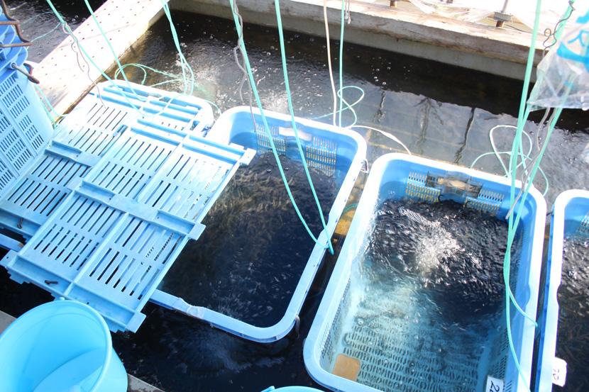 吉岡養魚場 代表:吉岡 正道