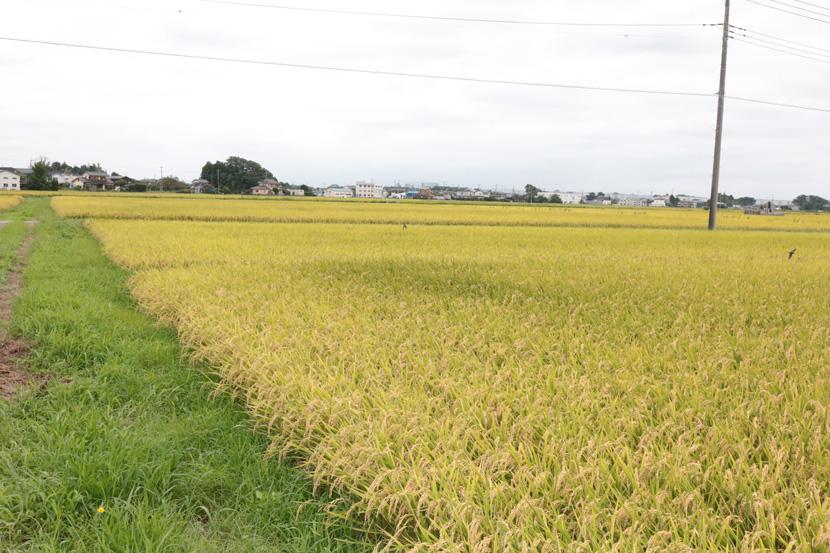 立原農産 代表:立原 司朗